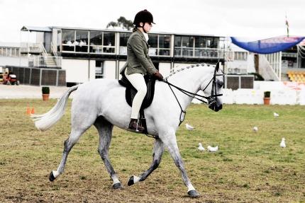 Un sport Lion, l'équitation
